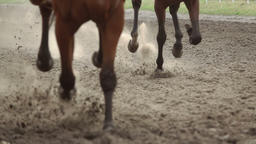 Knees of Horses that Run Fast. Slow Motion Footage