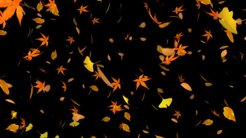 Flying dead leaves Animation