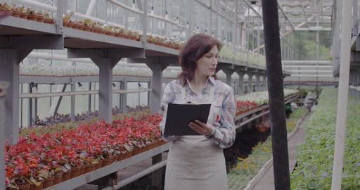 Serious woman looking at flowers in pots and taking notes. Confident Caucasian Live Action