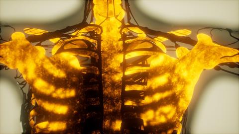 human skeleton bones scan glowing Live Action