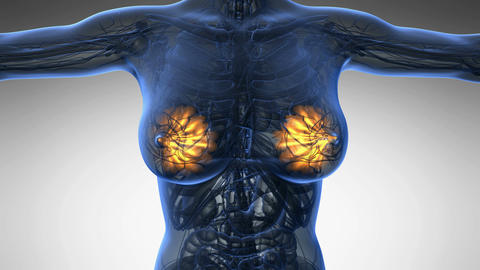 Loop science anatomy scan of woman mammaria glands glowing with yellow on white Animation