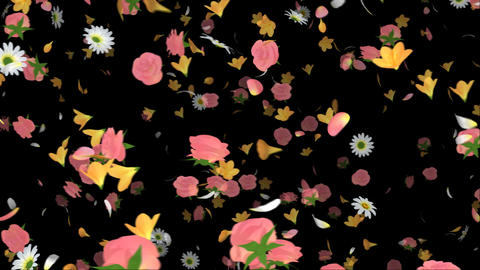 Flying Flower Stock Video Footage