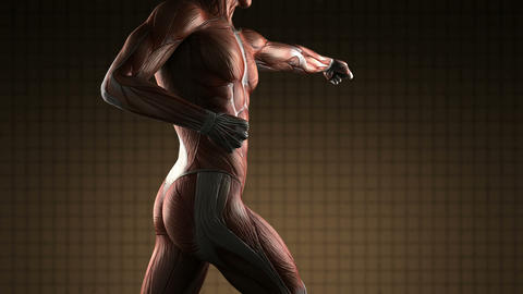 Human Muscle Anatomy Animation