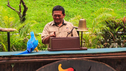 Parrot Counts Guy Fingers at Show in KL Bird Park Footage