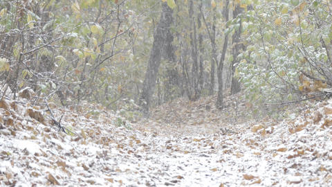 Snow falling in the woods Footage