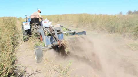 rural inhabitant on the tractor digs the potato Footage