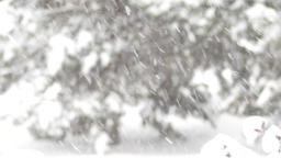 Heavy snowfall against remote blurred pine trees Footage