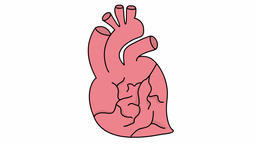 Heart medical sketch illustration hand drawn animation transparent Footage