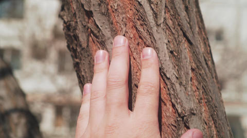 Male hand touches a tree, unity with nature. Close-up. 4k footage. Nature Live Action