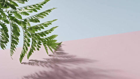 Smooth slow movement of a fern branch with green foliage touching a duotone pink Live Action