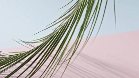 Smooth slow movement of a branch of an green tropical palm tree with long leaves Live Action