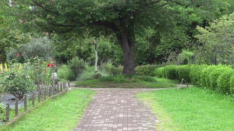 Kiba Park Green garden025 Live Action