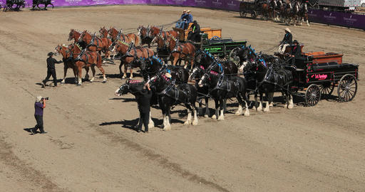 Draft horse wagon competition judge DCI 4K 598 Footage