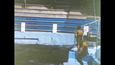 MIAMI 1980: Killer whale show 7 Live Action