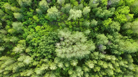 Green forest aerial top view. Mixed forest, green deciduous trees GIF
