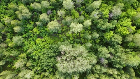 Green forest aerial top view. Mixed forest, green deciduous trees Live Action