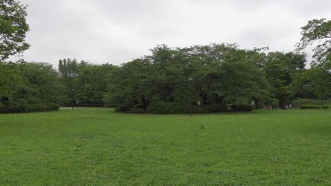 Rainy season sarue park143 Live Action