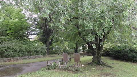 Rainy season sarue park007 Live Action
