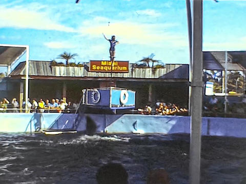 MIAMI 1980: Dolphinarium show 7 Live Action