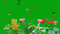 Butterflies Green Screen Background - 5 Videos 1
