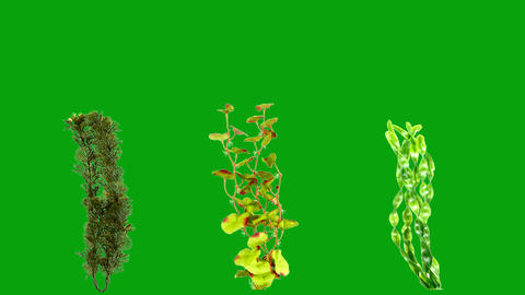 Underwater plants motion graphics with green screen background Animation