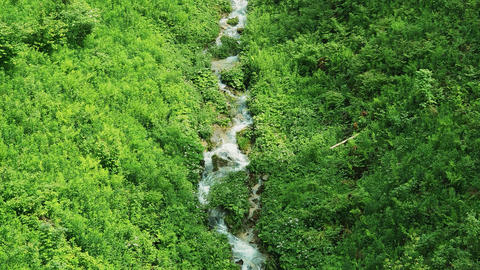 mountain small stream that flows down from the mountains among the green food Live Action