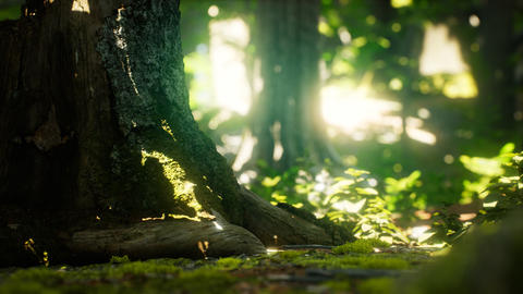 Sunlight rays pour through leaves in a rainforest Live Action