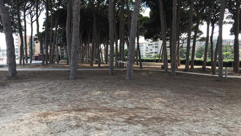 La-Pineda, Spain, A group of palm trees next to a tree Live Action