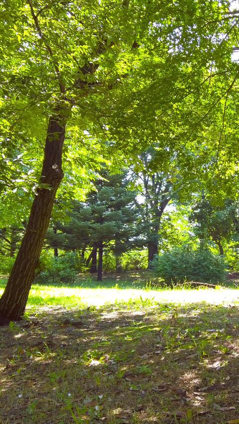 Forest_portrait Live Action