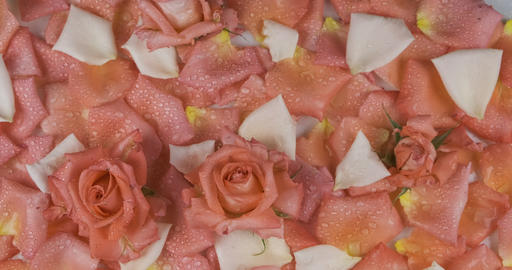Rotating background made of flowers and rose petals. Dew on flowers and petals Live Action