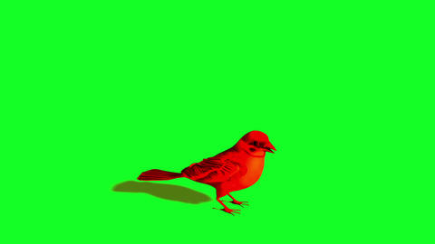 Bird Sparrow Is idle and Flying - Green Screen Animation