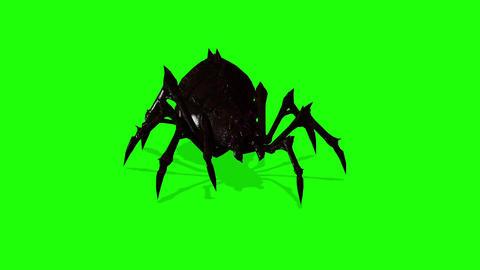 SAnimation Of Spider On Green Screen Creepy Crawlingpider 1 Animation