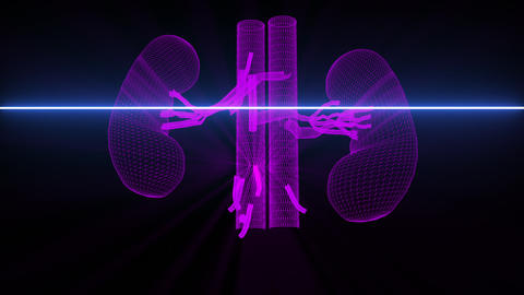 Medical scan of Kidneys - wireframe animation Animation