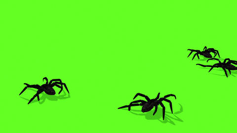 SAnimation Of Spiders On Green Screen Creepy Crawlingpider 11 Animation