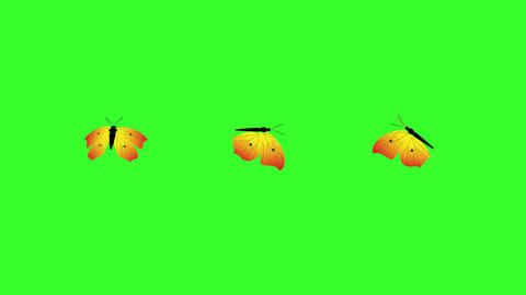 Butterfly Animations Green Screen 2