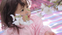 Portrait of young Japanese girl playing with cherry blossoms in a city park GIF