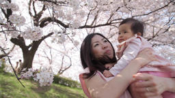 Japanese young mother and daughter enjoying cherry blossoms in a city park Footage