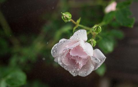 Beautiful summer garden flowers close-up Fotografía
