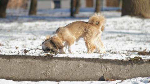 puppy runs on fresh snow under sunshine against houses Live Action