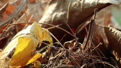 Autumn fallen leaves on the ground Live Action