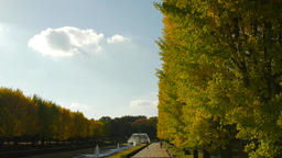 Ginkgo leaves in a city park, Tokyo, Japan Footage