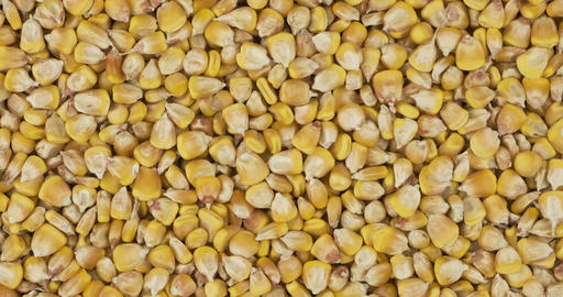 Corn grain background, texture. Rotation and zoom out of grain background Live Action