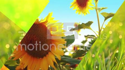 色紙風シンプルトランジション3種類【Colored Paper Transition】 After Effectsテンプレート
