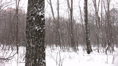 winter park panorama Stock Video Footage