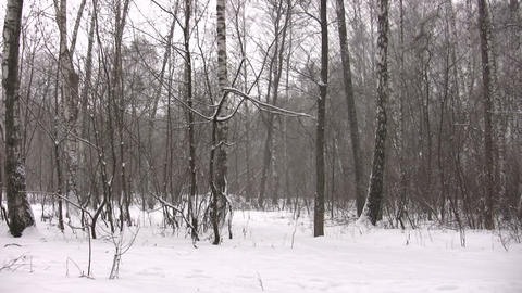 winter park panorama Stock Video Footage