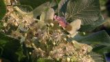 Butterfly05 stock footage