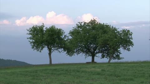 tree01sq px Footage