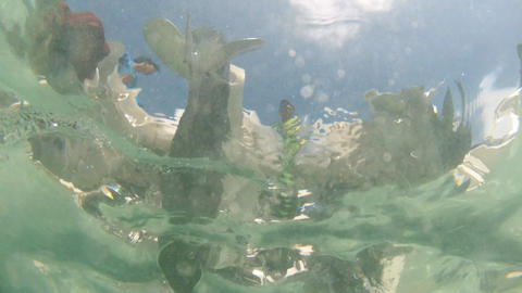 Underwater Stock Video Footage