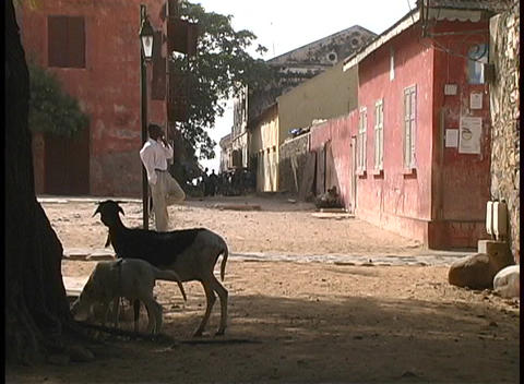 Goats and people hang out on these decaying streets in an African village Footage