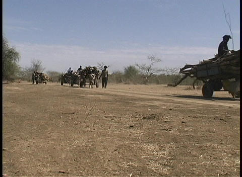 The shot zooms-in to a man with a cart, pulled by a burro, hauling wood along a dirt path in West Af Footage